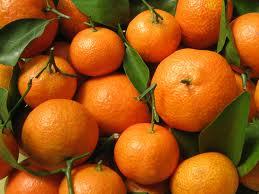 Web-OrangesWLeaves